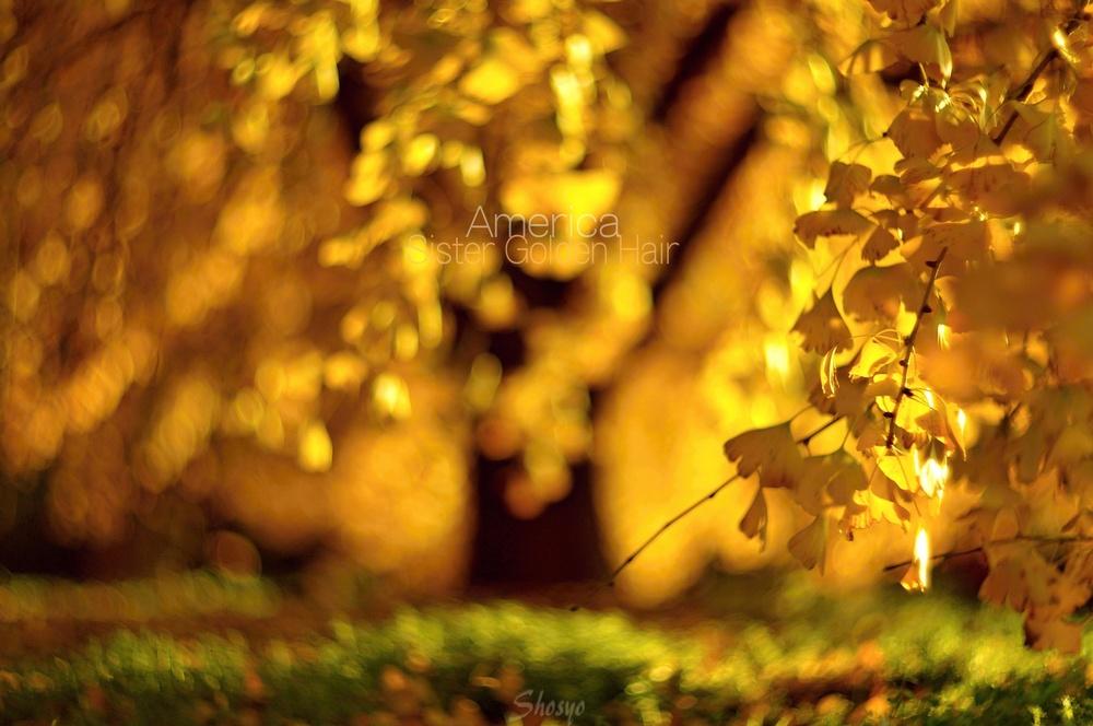 ★★DS_Helios85_042America-GoldenHair.JPG